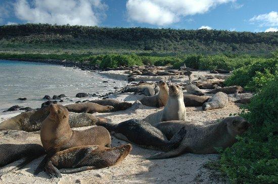 sfrtw2007.1205102520.sea-lion-colony-on-the-beach